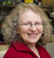 Medicine Grand Rounds: Antibodies, Behavior and Cognition: Rethinking Immune Privilege in SLE @ LKSC Berg Hall | Palo Alto | California | United States